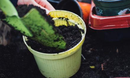 5 tips til at gøre din nye have til et veninde-hygge-projekt